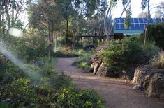Photograph portfolio of native gardens and landscapes designed and built by Australian Landscape designer Sam Cox.