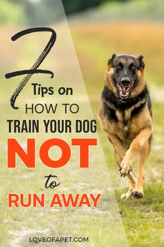 Training your dog not to run away is going to be hard and challenging. So if you're wondering what you can do to stop it, then you've come to the right place. Puppy Care, Dog Care, Training Your Puppy, Dog Hacks, Dog Agility, Dog Behavior, Dog Grooming, Dog Mom, Best Dogs