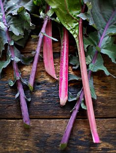 "Don't overlook planting (or eating) tasty, nutritious and beautiful greens in your veggie garden. Pictured are Kale ""Red Russian"" and a ruby stemmed swiss chard. Follow the link to a great sounding recipe from Sarah B at My New Roots for Flavour Bomb Greens & Noodles."