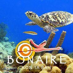 Foto by#Bonairetoerisme#