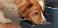 Pintofeed, a smartphone-enabled pet feeder