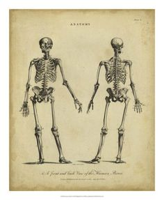 Anatomy Study I Posters by Jack Wilkes - AllPosters.ca