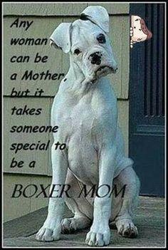 De witte Boxer - www.boxersvanfearplayskathy.nl