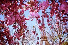 paris in spring (via making magique, one of my favorite blogs)