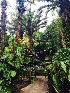 Hawaii Tropical Botanical Gardens.  Must see!