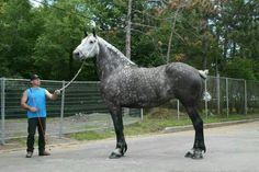Either this guy is really short, the horse is really tall or someone did a great job in photoshop!!