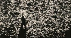 Masao Yamamoto. Exposición 'Small  Things in Silence' (detalle)