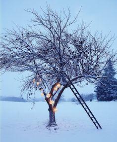 ideal winter!