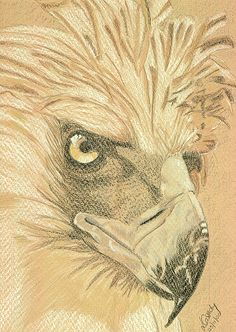My Philippine Eagle Project