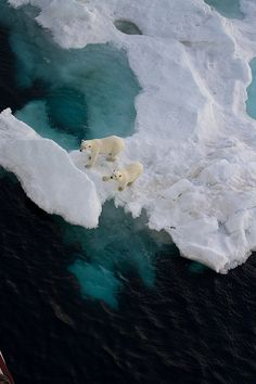Mother and cub on sea ice from above...