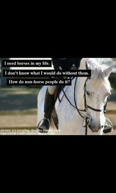 Horses https://feelmyvibe.com/collections/all