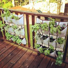 My hanging herb garden. I cut a hanging she rack in two, added soil and planted my herbs! @Audrey Francis