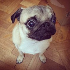 When you're in the club on Saturday night and your ex walks in  #puglife