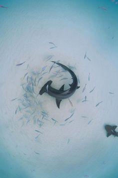 Natur- und Tierfotografie als minimalistische abstrakte Kunst . Cool Sea Creatures, Beautiful Sea Creatures, Ocean Creatures, Animals Beautiful, Pictures Of Sea Creatures, Ocean Photography, Wildlife Photography, Animal Photography, Abstract Photography