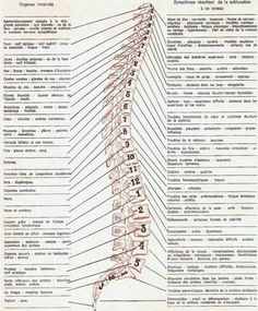 Spine Health, Health Heal, Tai Chi, Life Hacks Shopping, Shiatsu, Cupping Therapy, Body Map, Yoga Positions, Massage Techniques