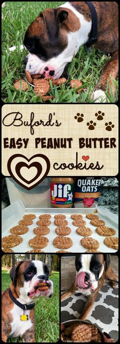 Our puppy Buford loves his peanut butter, and these cookies are loaded with that…