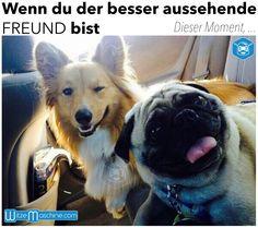 Dieser Moment, wenn du der besser aussehende Freund bist - Funny Dogs, Lustige Hunde