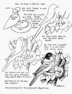 How to Draw Worksheets for The Young Artist: How To Draw A Robins Nest Picture, Free Worksheet