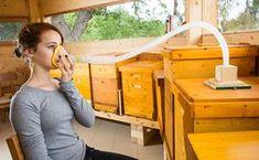 Las abejas contra el asma Una de las últimas terapias asociadas a las abejas: La inhalación del aire interior de una colmena puede ayudar, entre otros en el asma. En lasenfermedades del sistema inmuney las…