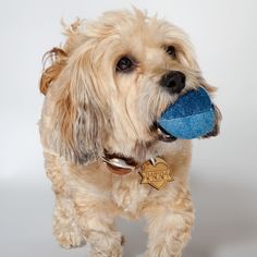 DOG & CO.   Cheeky the Dog with the Denim Ball Toy