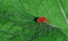 #Noticias y #artículos sobre #agricultura #ecológica, #productos, #solunciones y mucho más en nuestro #blog