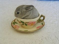 teacup bunny. @Bethany Curry Fletcher and Banjo can prob fit in that large teacup like this!