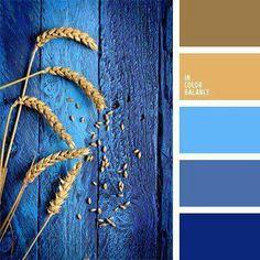 Champ de blé bleuté