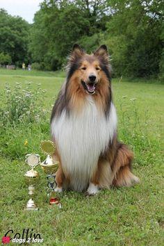 Colli Collin  Ganz schön preisverdächtig   Rasse: Colli / Name: Collin     Mehr lesen: http://d2l.in/3i  dogs2love - Gassi gehen zum Verlieben. Partnerbörse für alle, die Hunde lieben.  Bild, Dating, Foto, Hund, Single
