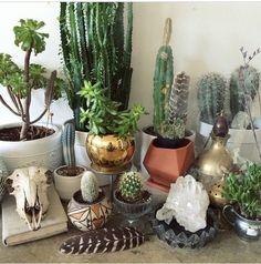 indoor garden goals  #banditplants