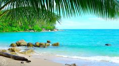 Tropical island beach ambience sound - 8 Hours ocean sounds for relaxation and holiday feeling. Relaxing video of a tropical beach with clear blue water and ...