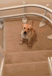 Going Down The Stairs With Grace. Well, is there any other way to go down the stairs? Ha ha ha!
