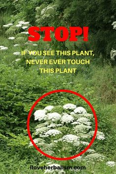 STOP! If You See This Plant, Never Ever Touch This Plant