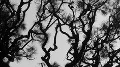 https://flic.kr/p/7WXTWw | 8271 / treescape