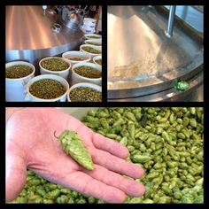 Fresh Hop Collage. #hops #beer  Deschutes Brewery is a Green Spot business AND winner of the of the 2012 Sustainability Awards: http://envirocenter.org/get-involved/sustainability-awards/deschutes-brewery-large-business-sustainability-champion-1