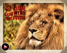 Image detail for -lion country safari florida s only drive through safari and walk ...