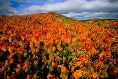 Yann Arthus-Bertrand - Autumn Forest in the Region of Charlevoix, Quebec, Canada