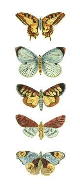 Swirlydoos Monthly Scrapbook Kit Club: Forums / Images & Graphics / Butterflies  Loads!