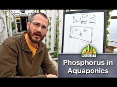 Aquaponic Plant Nutrients: Phosphorus - YouTube