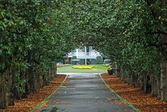 Magnolia Lane ,um dos lugares mais lindos do mundo do Golf