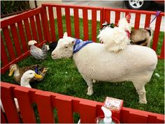 Humane petting zoo for parties