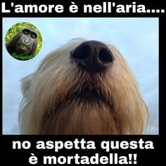 #funny #joke #memesita #battute #risate #memeitalia #indovinelli #humor #battute #immaginidivertenti #divertente #meme #ridi #ridere #day #divertenti #italy #frasi #battutedivertenti #barzellette #amorenellaria #amore #cane #dog #mortadella #lamoreènellaria #loveisintheair #love #food #foodlover