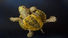 Animals, Birds, Creatures   Wild Life & Sea Side - Collection -1