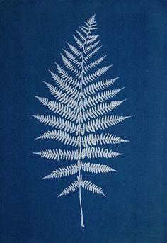 Farn / Cyanotypie / Fine Art Blue Print von Anna Maria Bellmann Source by wanderlust_jlt Botanical Art, Botanical Illustration, Art Blue, Sun Prints, Fine Paper, Cyanotype, Arte Floral, Fabric Painting, Ferns