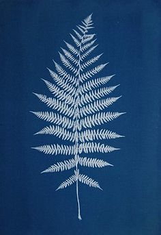 fern / cyanotype / fine art blue print by Anna Maria Bellmann