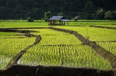 Good Morning Planet - Le Blog   Préparer son voyage en Thaïlande   GMP