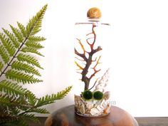 Marimo Moss Ball Terrarium / Aquarium: Slender Vase with Wood Stopper- Several Different Colors Available