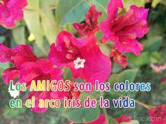 Los amigos son los colores en el arco iris de la vida.