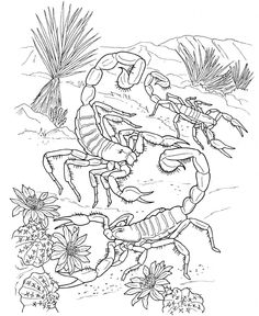 Scorpion Coloring Pages Photos