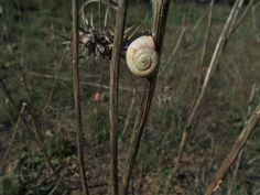 La espiral de Fibonaccin en la Naturaleza
