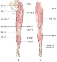 달리기정보_ 다리근육
